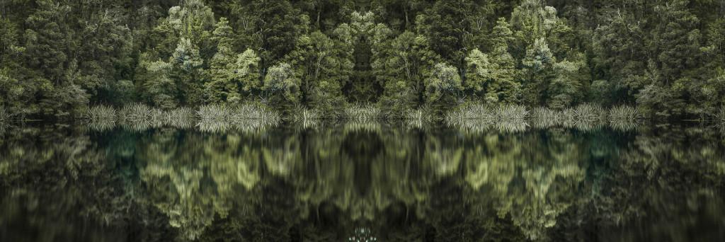Bosques y Arboles