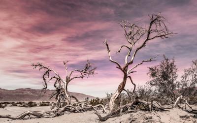Valle de la Muerte. USA